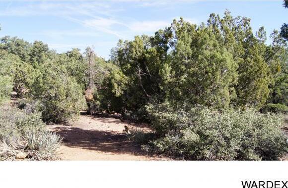 6731 N. Trap Springs Rd., Hackberry, AZ 86411 Photo 37
