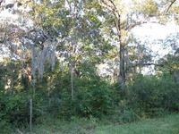 Home for sale: Lot 13 Susan Bradford Ln., Tallahassee, FL 32309
