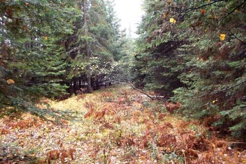 Lot 1 - 5813 Hwy. 70, Eagle River, WI 54521 Photo 6