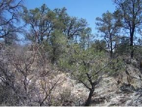 6525 Box Canyon (Lot 119), Prescott, AZ 86305 Photo 3
