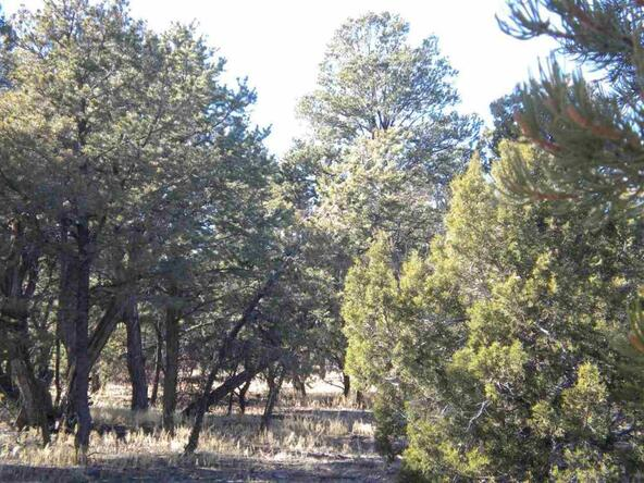5088 Tosca Cir., Pinedale, AZ 85934 Photo 2