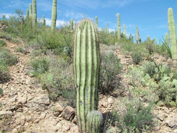 6940 W. Wasson Vista, Tucson, AZ 85745 Photo 32