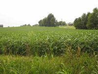 Home for sale: Lot 6 & 7 S. Dixie Hwy., Sonora, KY 42776
