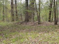 Home for sale: Lot 100 Daniel Boone Dr., Eddyville, KY 42038
