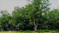 Home for sale: Tw 63 Sweet Birch Ln., Hazleton, PA 18202