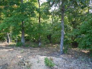 565 Thief Neck View Dr., Rockwood, TN 37854 Photo 45
