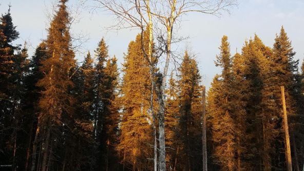 14613 E. Wilderness Rim, Willow, AK 99688 Photo 18