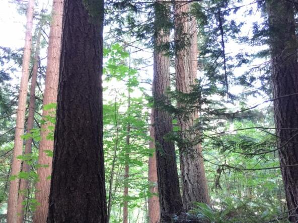 1 Thunder Peak Way, Bellingham, WA 98229 Photo 3