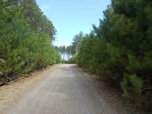 Lot 7 On Towering Pines Ln., Rhinelander, WI 54501 Photo 11