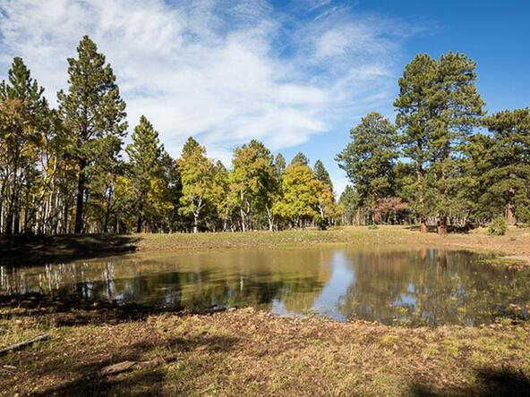 Tbd S. Sage Grouse Rd., Lot 10, Placerville, CO 81430 Photo 2