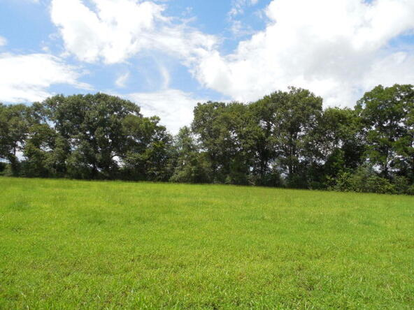 5 Acres Hwy. 103, Slocomb, AL 36375 Photo 5