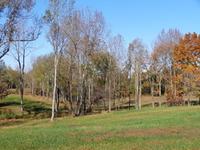 Home for sale: 1865 Eva Flatwoods Rd., Eva, TN 38333