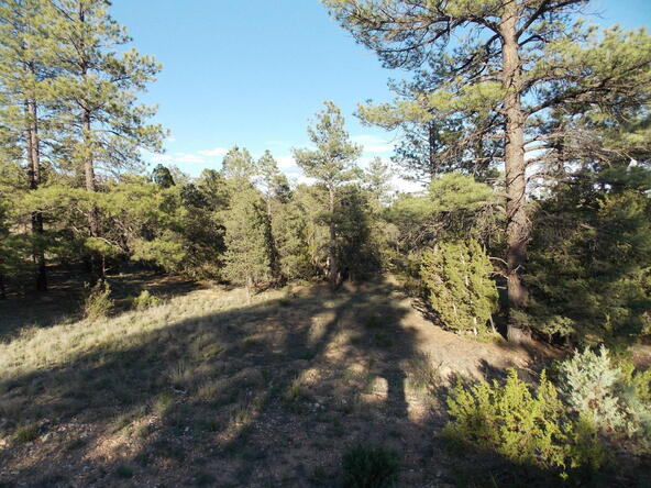 2945 Lodgepole, Overgaard, AZ 85933 Photo 7