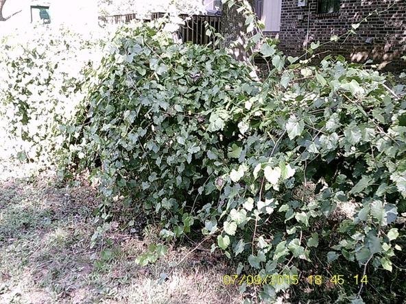 432 Cr 3355, Clarksville, AR 72830 Photo 23
