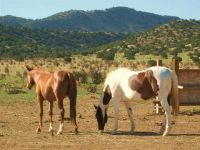 Home for sale: 312 Old Windmill Trail, Cerrillos, NM 87010