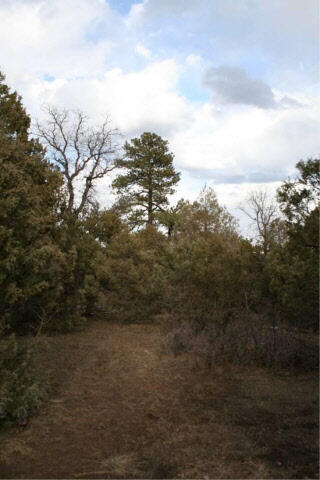 Doe Rim Loop, Chama, NM 87520 Photo 13