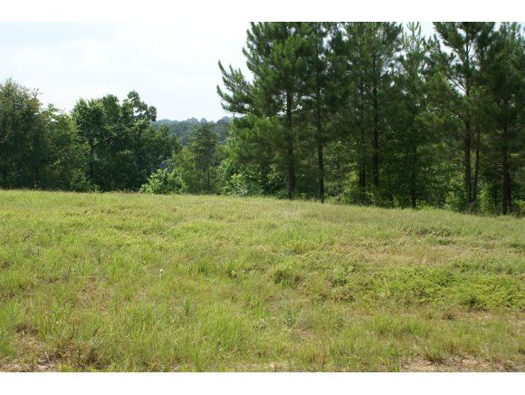 224 Co Rd. 907 (Lot 8), Crane Hill, AL 35053 Photo 2